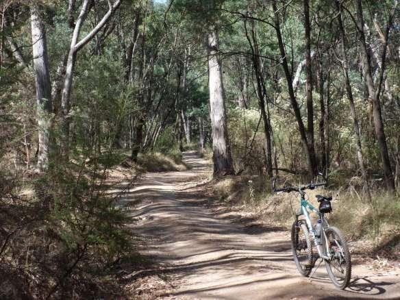 Mt Wombat Road