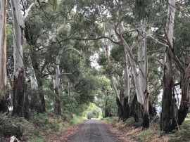 We started at the Strathbogie - Euroa Rd end