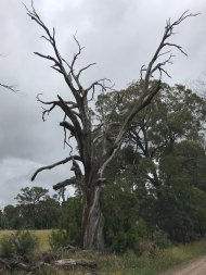 The mandatory photo of a dead tree